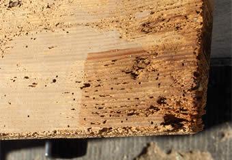 restauration de tableau la consolidation des bois par enduction. Black Bedroom Furniture Sets. Home Design Ideas